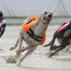 Romford Tips: ChopChop Hope set to roll back the years on Friday night