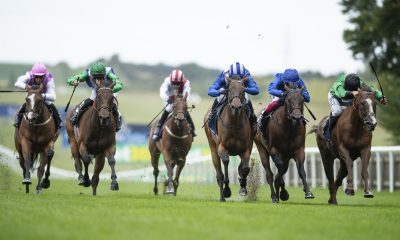 newmarket tipping preview