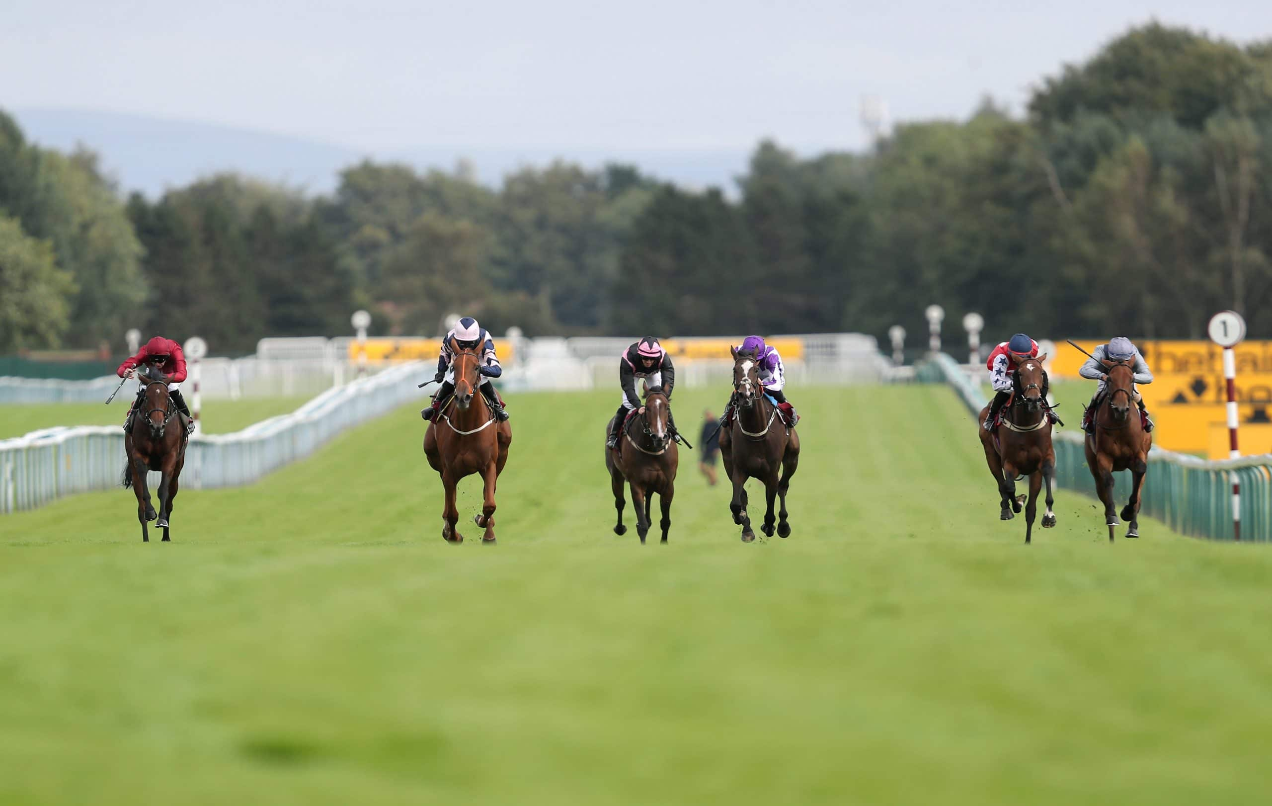 haydock betting tips